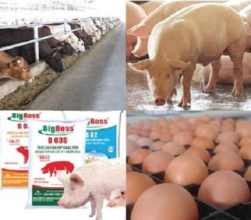 lĩnh vực chăn nuôi tăng trưởng tốt