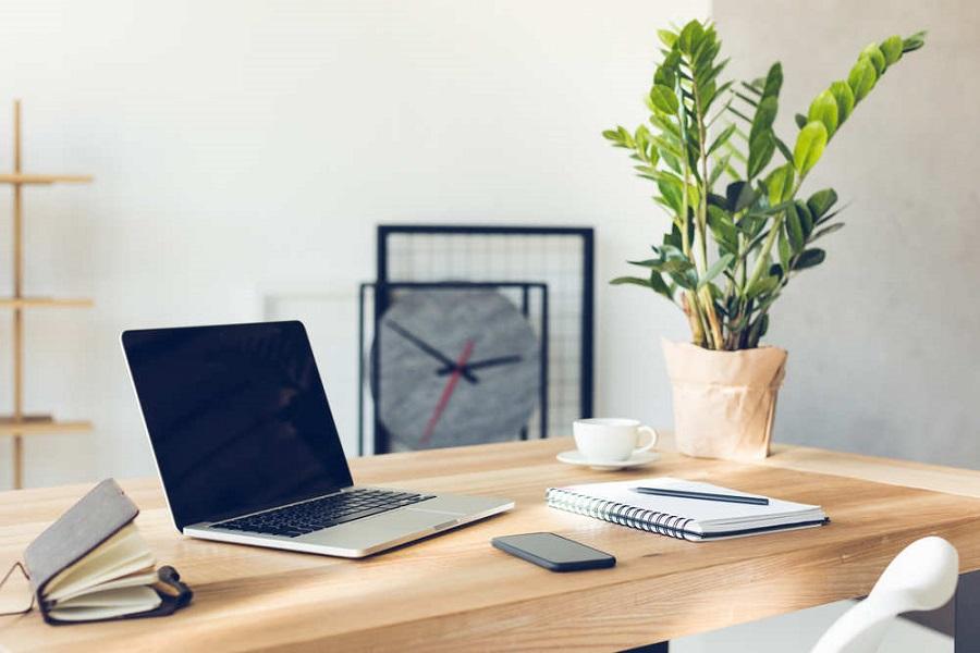 cây để bàn làm việc giúp làm giảm bụi cho văn phòng