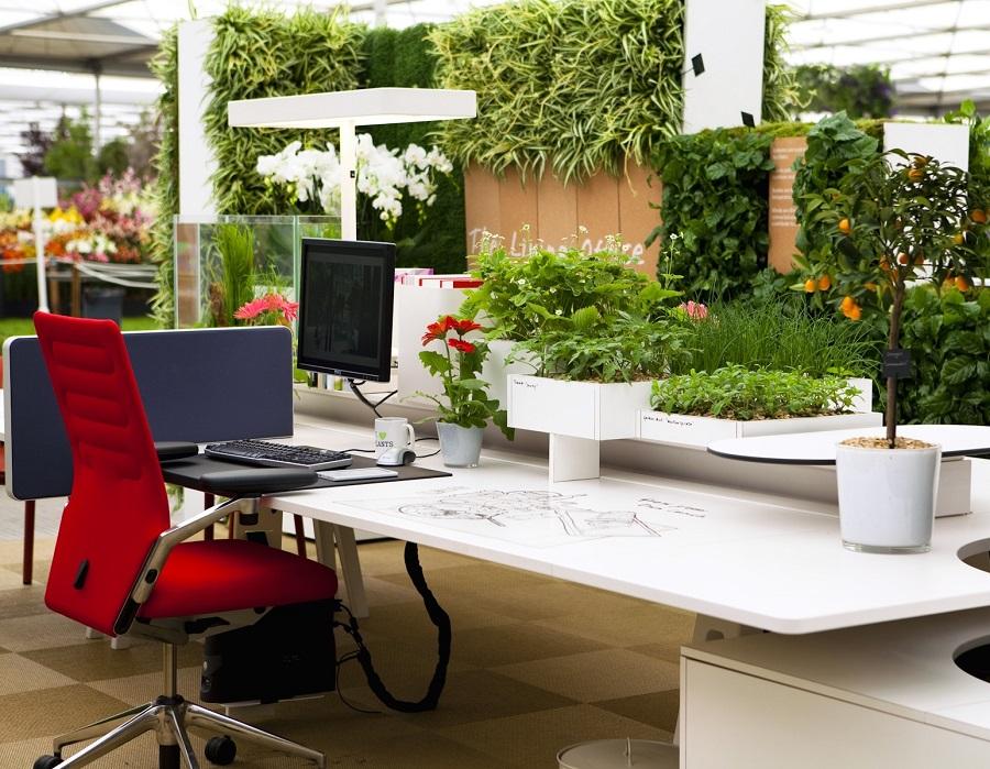 cây để bàn làm việc giúp cho hiệu suất làm việc tăng
