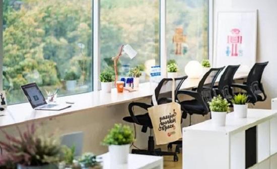 cây để bàn làm việc giúp giảm bớt tác hại của bức xạ